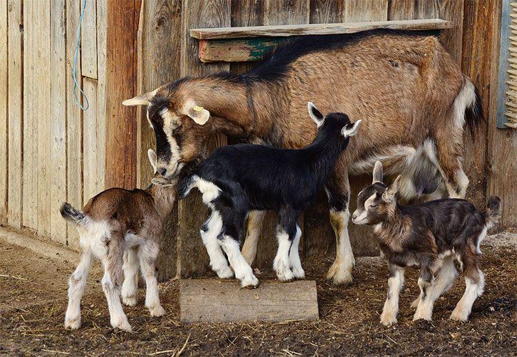 casas rurales pais vasco para ir con niños