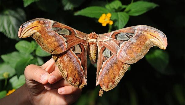 casa de las mariposas roma