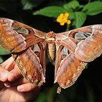 La Casa de las Mariposas de Roma: un proyecto de concienciación ambiental para niños
